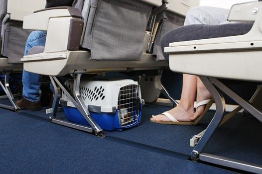 Vật nuôi trên chuyến bay Thai Airways